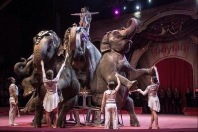 НКО Кургана приглашают детей из многодетных семей в цирк